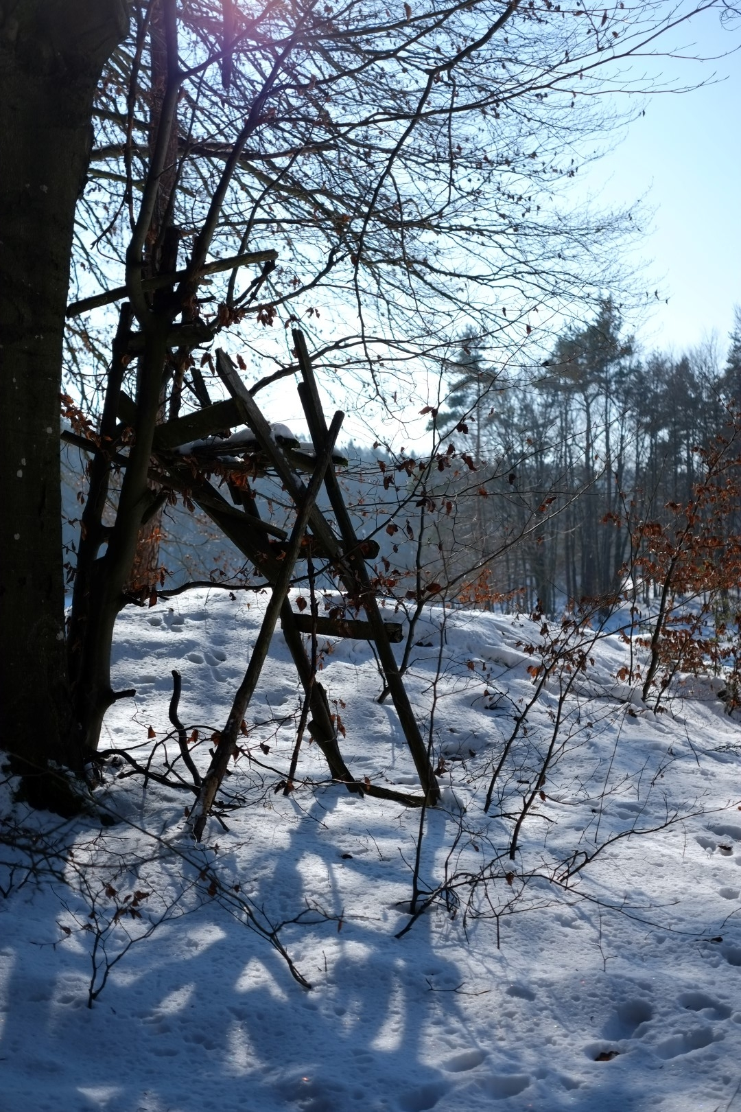 08_Hegendorf_Feb_2015