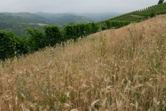 Piemont2016-022