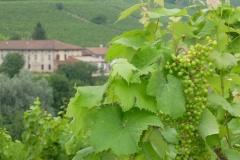 Piemont2016-098