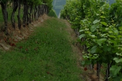 Piemont2016-099